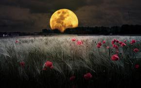 Поле, вечер, луна, романтика, небо, мак, облака