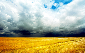 wheat, field, sky, clouds, bad weather