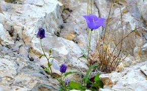 stone, flower, liana, purpel, macro, shoots