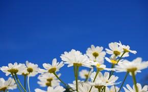 天空, 花卉, 黄