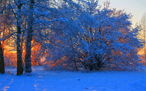 inverno, tramonto, neve, alberi, ramo