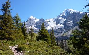 alberi, foresta, abete rosso, conifero, traccia, sentiero, sentiero, Montagne, cielo, picco, neve