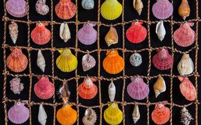 ракушки, морские, цветные, клетки, веревка