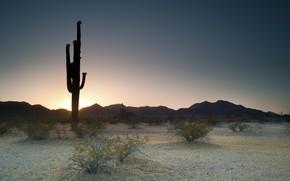 evening, sunset, cacti, nature