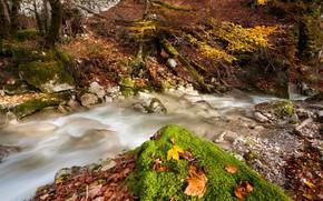 Fluss, Herbst, verlsst, Natur