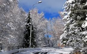 дорога, снег, пейзаж