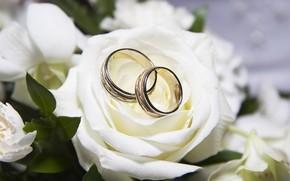White, rose, wedding, Ring
