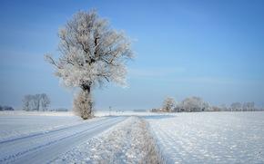 strada, albero, inverno, paesaggio