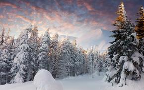 floresta, comeu, neve, inverno, Montanhas, drifts