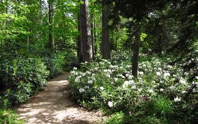 foresta, alberi, sentiero