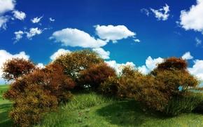 небо, зелень, куст, облака