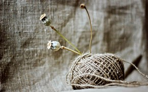 texture, MOTOC, rope, thread, Flowers, poppy