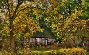 Germany, Seevetal, home, autumn, Trees, foliage, shop, fireplace, Table, roof, Swing, area, Art