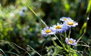 estate, fiori, natura