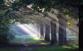 foresta, sentiero, luce, natura