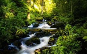 Sfondi, bellezza, natura, torrente