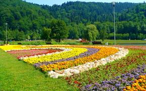 fiori, noua, bv, fiori, aiuola, alberi
