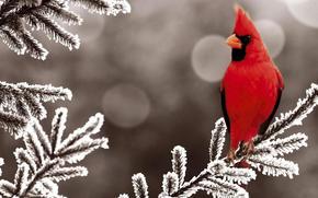 red, bird, angry, snow, sun, Tree, bird, red, snow