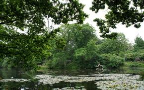 性质, 池塘, 树, 睡莲, 花卉