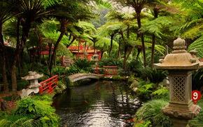 Португалия, madeira, Фуншал, Ботанический сад
