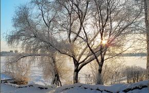 inverno, neve, alberi, ramo
