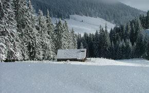 winter, trees, snow, sky, Winter, snow, home, ate
