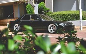 хонда, листья, Honda