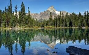 lake ohara, yoho national park, canada, Canada, lake, reflection, forest, ate, Mountains