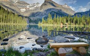 lake ohara, yoho national park, canada, Canada, lake, bench, stones, houses, forest, ate, Mountains