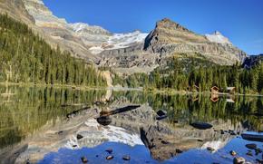 lake ohara, yoho national park, canada, Canada, lake, reflection, Mountains, forest