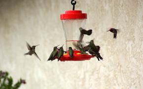 Птицы, кормушка, поилка, колибри