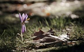 flor, lista, Naturaleza, Macro