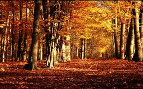 parco, alberi, autunno, natura