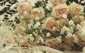 Rose, Romantik, Zrtlichkeit