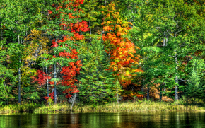 природа, пейзаж, озеро, вода, деревья, осень, лес