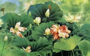 Pittura cinese, disegno, Arte, loto, fiori, fogliame, libellula, Personaggi