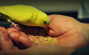 animali domestici, generi alimentari, Pappagalli, animali domestici, cibo, pappagalli
