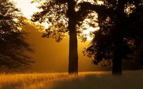 Morning, Trees, landscape