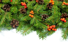 Berries, Cones, branch, spruce, New Year