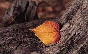 albero, elenco, corteccia
