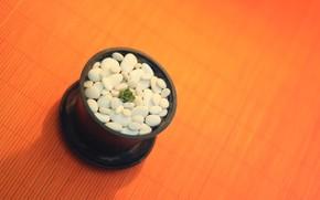 фон, горшок, камни, камушки, растение, кактус, маленький