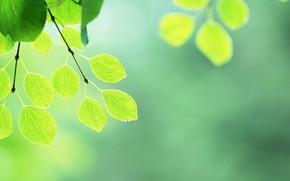 list, leaflets, green, summer