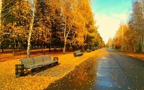 Парк, вечер, листья, листва, скамейка, золотая осень, Омск