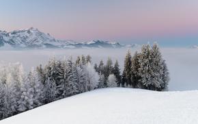 Montagne, inverno, paesaggio, alberi