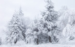 winter, forest, snow, white, Trees