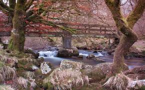 river, stones, belstone, england, Trees, moss