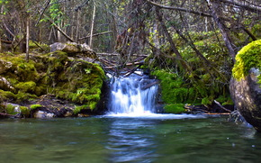 瀑布, 溪, 苔, 支