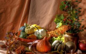 still life, pumpkin, shrubs, Berries