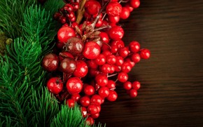 holly, holly, plant, Berries, red, branch, Tree, spruce