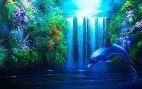 wodospad, rolina, delfin